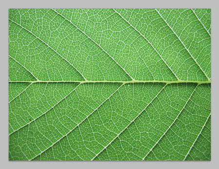 Как залить лист в ворде цветом
