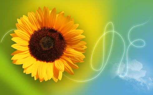 Create sunflower themed wallpaper in Adobe Photoshop CS4